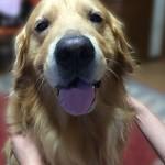 犬の犬歯?!